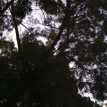 Sad to see this balloon in the tree.